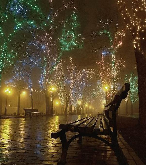 Christmas lights and bench