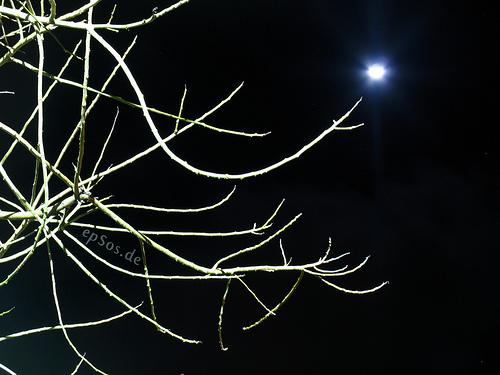 Dark Moon Tree epSosDe Flickr