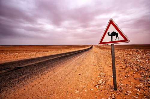 Camel crossing sign Bartek Kuzia
