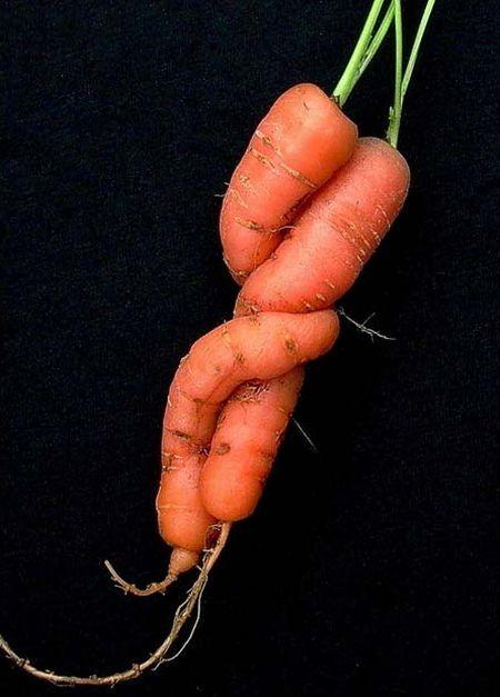 Embracing carrots