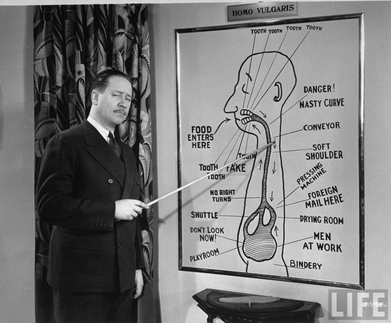 Robert Benchley with diagram of digestive system