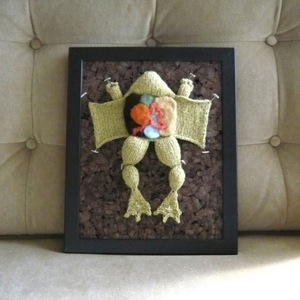 Etsy frog dissection