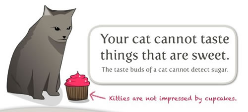 Your cat cannot detect sweet things