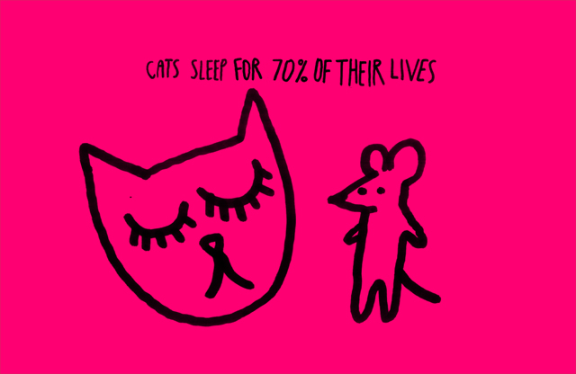 Cats sleep 70 per cent of their lives