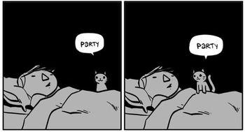 Party cat screengrab