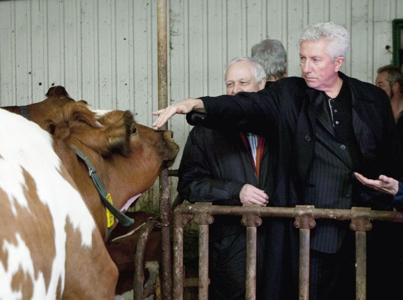 Gilles Duceppe cow campain trail David Olive blog