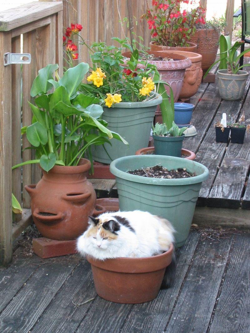 Cat in pot Teya Rosenberg