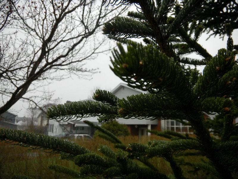Rainy branch