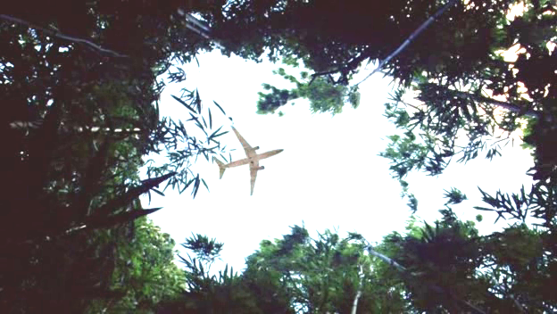 Lost plane leaves