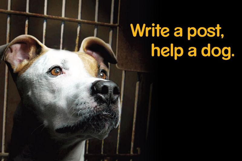 Write a Post Help a Dog Pedigree blogging challenge