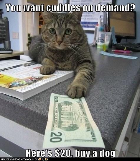 Cats do not do cuddles cheezeburger