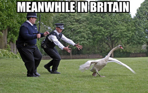 Meanwhile in Britain Hot Fuzz swan