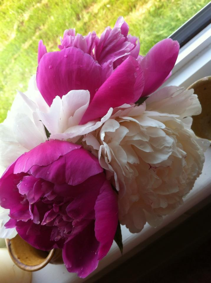 Mom's peonies for Martha 20130709