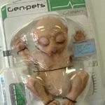 Genpetinplastic