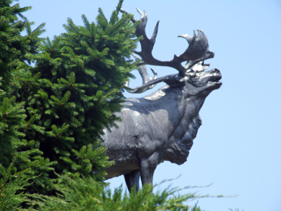 Caribou_at_beaumont_hamel