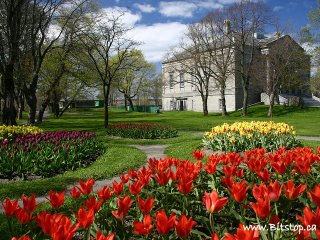 Colonial_building_tulips_from_bitst