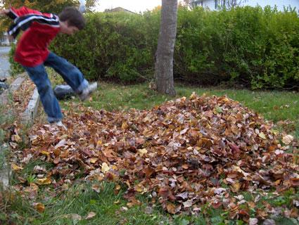 Nicholas_leaf_jumping