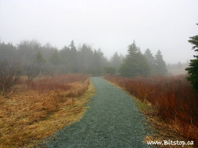 Foggy_walk_from_bitstop