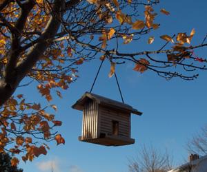 Fallleavesandbirdhouse_1